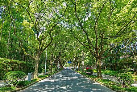 绿树成荫的校园图片
