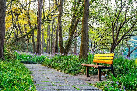 早晨晨光公园内林荫小道图片
