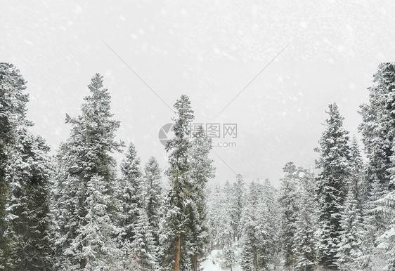 雪鹿风景图片