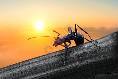 抬树的蚂蚁图片