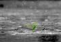 灰色地带中顽强生长的幼苗图片