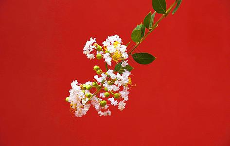 红墙下的鲜花图片
