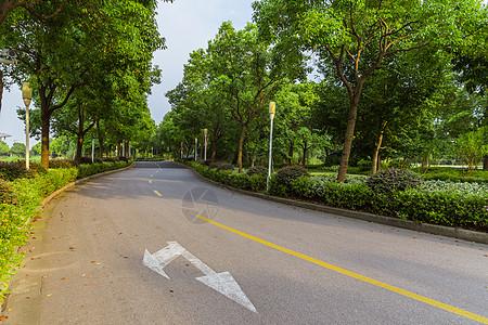 上海视觉艺术学院校园路图片