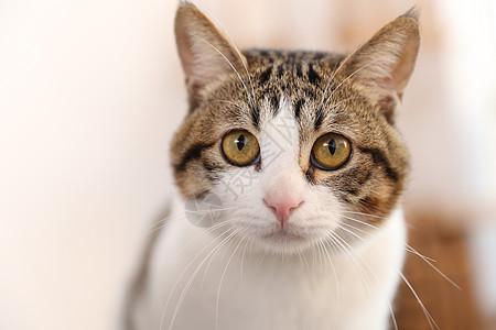 猫咪居家照图片
