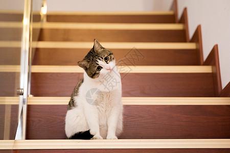 居家照猫咪图片
