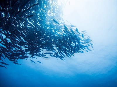 潜水海洋图片