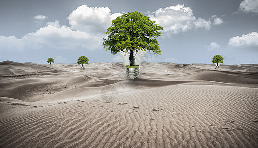 沙漠中的植物图片