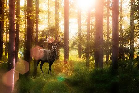 森林中的鹿图片