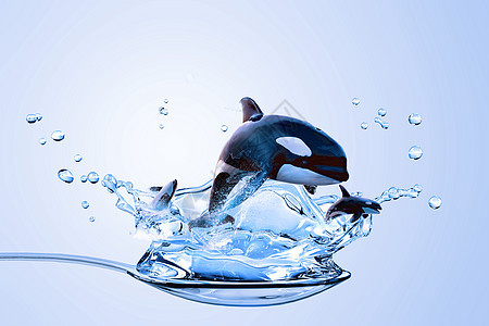 勺子上的海豚图片