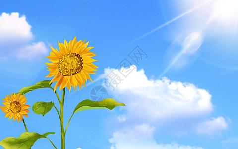 代表希望的微笑的太阳花图片