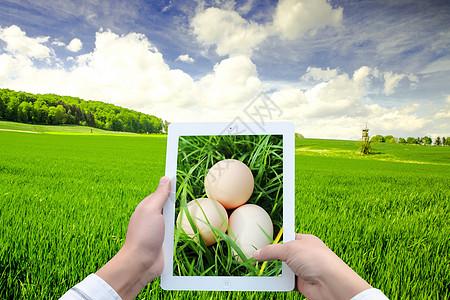 草丛中的鸡蛋图片