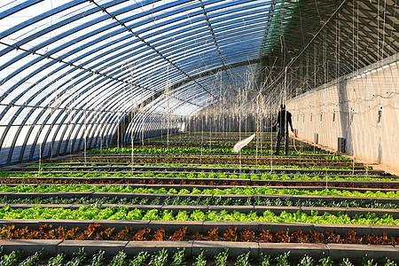 蔬菜大棚图片