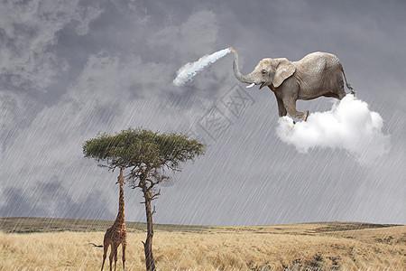 灌溉草原的大象图片