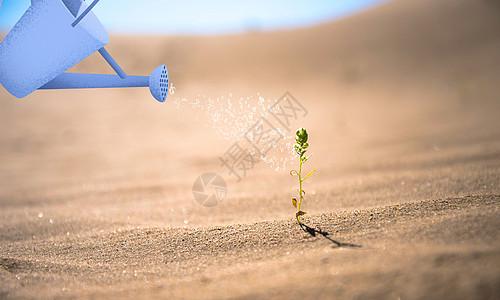 沙漠之希望图片
