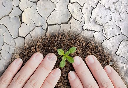 植树造林人人有责图片