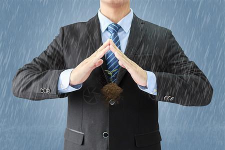 树苗的保护伞图片
