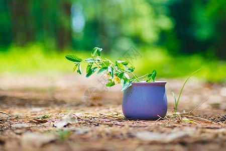静物花盆图片