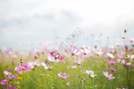 一片花海图片