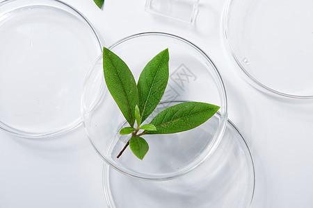 绿植静物玻璃器皿图片