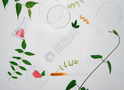 透光绿植组合图片