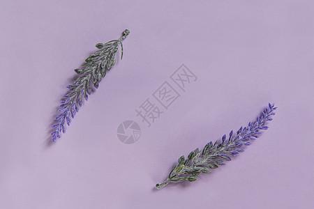 紫色背景薰衣草静物图片