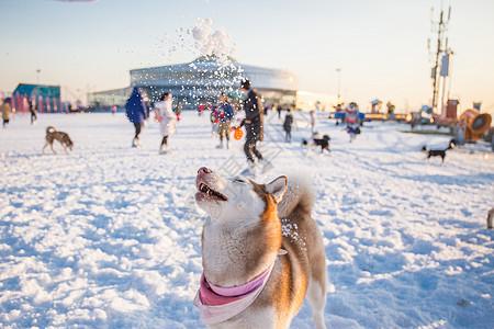 狗狗雪地游玩图片