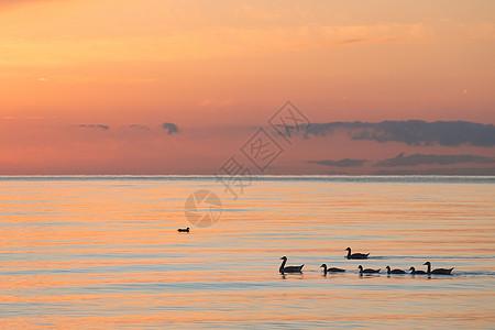 青海湖里的家庭图片