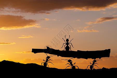 抬树的蚂蚁剪影图片