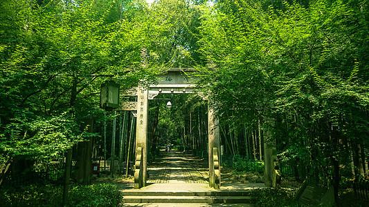 静谧的竹林小道图片