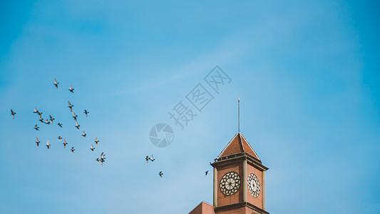 蓝色天空钟楼鸽子图片
