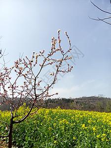 春天里的花香图片