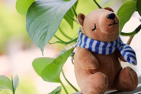 可爱的小熊娃娃图片