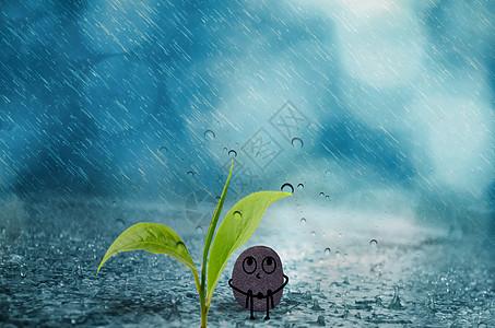 在叶子下避雨的小石头图片