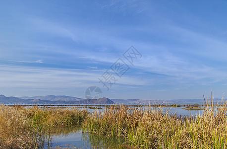 滇池湿地图片