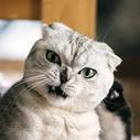 生气的猫图片