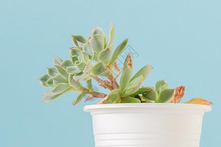 清新的绿色小植物图片