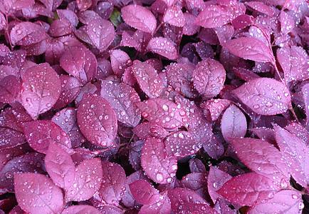 辰山植物园稀有品种图片