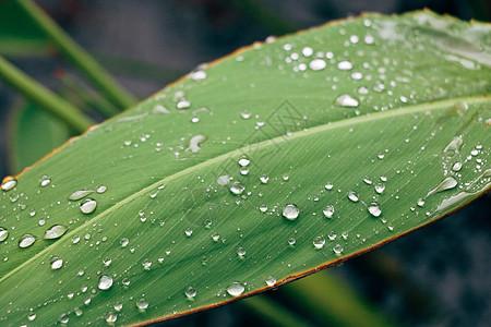 一片雨后的叶子图片
