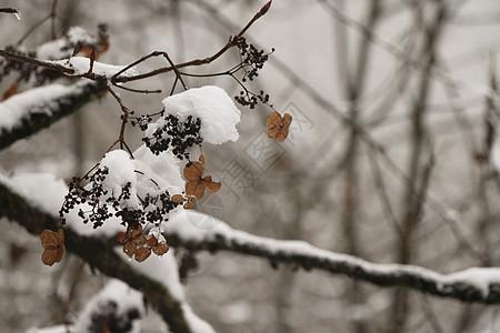雪景特写图片