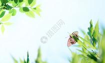夏日午后的树叶蝴蝶背景图片