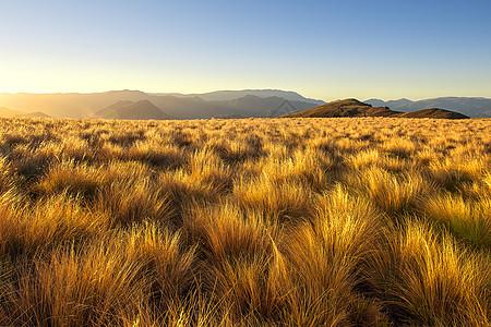 日出时分的高山牧场图片