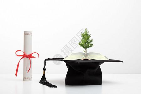 创意书籍学士帽证书大树图片