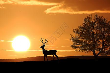 最宝贵的鹿角图片