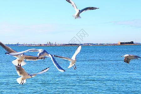 海上自由飞翔的鸟儿图片