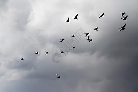 湖边飞鸟图片_湖边飞鸟素材_湖边飞鸟高清图片_摄图网