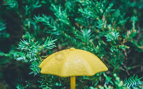 雨天雨伞下雨特写图片