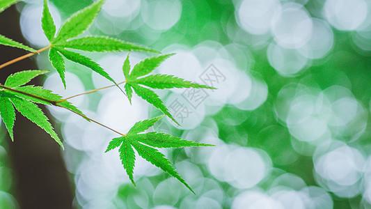 清新绿叶背景图片