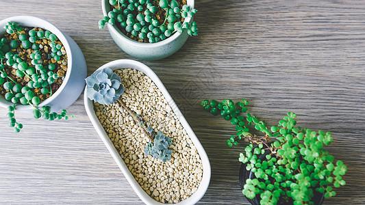 办公桌绿色植物图片