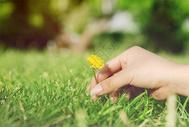 绿色草坪上女孩的手摘一朵小花图片