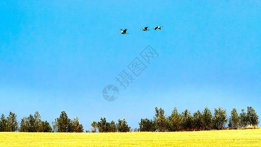 鸟儿迁徙图片